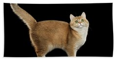 Funny British Cat Golden Color Of Fur Beach Towel