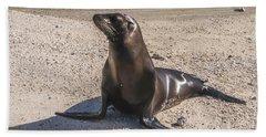 Galapagos Sea Lion Beach Towel