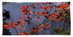 Gamble Oak In Crimson Fall Splendor Beach Towel