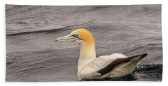 Gannet 5 Beach Towel