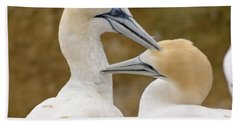 Beach Towel featuring the photograph Gannet Pair 1 by Werner Padarin