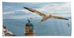 Gannets At Bass Rock Lighthouse Beach Towel