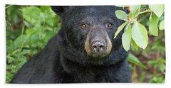 Gazing Black Bear Beach Sheet