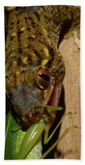 Gecko Feed Beach Towel