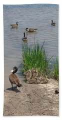 Beach Sheet featuring the photograph Geese And Goslings by Ellen Tully