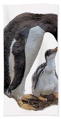 Gentoo Penguins Beach Towel