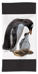 Gentoo Penguins Beach Sheet