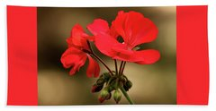 Beach Towel featuring the photograph Geranium Blooms by Sheila Brown