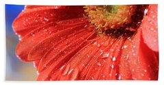 Gerbera Daisy After The Rain Beach Sheet