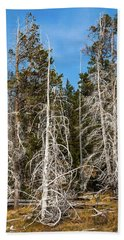 Beach Towel featuring the photograph Ghost Pines At Yellowstone National Park by Lon Dittrick