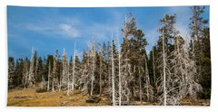Beach Towel featuring the photograph Ghost Trees At Yellowstone by Lon Dittrick