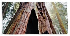Giant Forest Giant Sequoia Beach Sheet