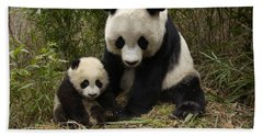 Beach Towel featuring the photograph Giant Panda Ailuropoda Melanoleuca by Katherine Feng