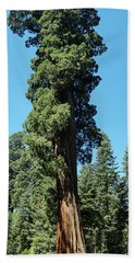 Giant Sequoia, Sequoia Np, Ca Beach Towel