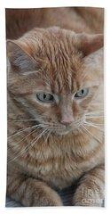 Ginger Cat Beach Sheet