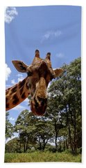 Giraffe Getting Personal 4 Beach Towel