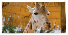 Giraffe In The Zoo. Beach Towel