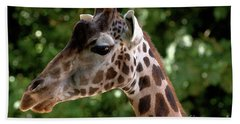 Giraffe Portrait Beach Sheet