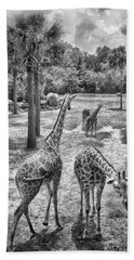 Beach Towel featuring the photograph Giraffe Reticulated by Howard Salmon