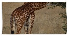 Giraffes Eating - Side View Beach Towel by Exploramum Exploramum