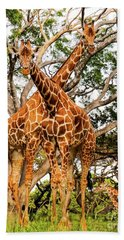 Beach Towel featuring the photograph Giraffe's Looking by D Davila