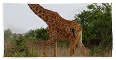 Giraffes On A Walk Beach Towel