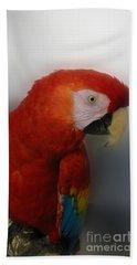 Glowing Macaw Beach Towel by Victoria Harrington