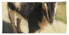 Goat Beach Towel by Heather Applegate