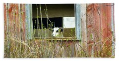 Beach Towel featuring the photograph Goat In The Window by Donald C Morgan