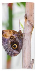 Beach Towel featuring the photograph Gold And Brown Butterfly by Raphael Lopez