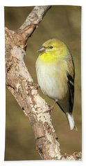 Beach Towel featuring the photograph Gold Finch by David Waldrop