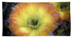 Golden Cactus Bloom Beach Sheet by Saija  Lehtonen