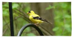 Golden Finch Beach Towel by Rand Herron