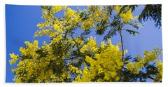 Beach Towel featuring the photograph Golden Wattle by Angela DeFrias