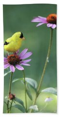 Goldfinch On A Coneflower Beach Towel