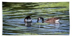 Goose Tipping Beach Towel by Ray Congrove