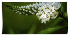 Gooseneck Loosestrife Beach Sheet