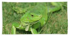 Gorgeous Green Iguana Stretched Out Beach Towel