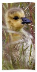Beach Towel featuring the photograph Gosling In The Meadow by Sue Harper