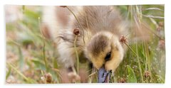 Beach Towel featuring the photograph Gosling Nibble by Sue Harper