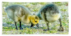 Beach Towel featuring the photograph Goslings Snacking by Steven Santamour