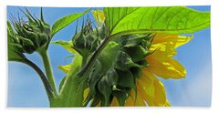 Gospel Flat Sunflower #2 Beach Towel