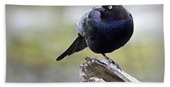 Beach Sheet featuring the photograph Grackle Resting by AJ Schibig