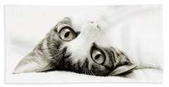 Beach Towel featuring the photograph Grand Kitty Cuteness Bw by Andee Design