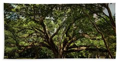 Grand Oak Tree Beach Sheet by Judy Vincent