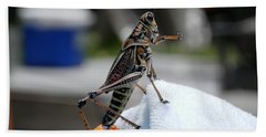 Dancing Grasshopper At The Pool Beach Towel by Belinda Lee