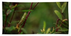 Grasshopper Holding On Beach Towel by Ray Congrove