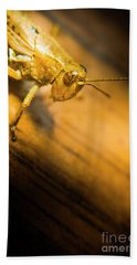 Grasshopper Under Shining Yellow Light Beach Towel