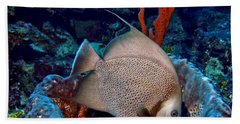Gray Angel Fish And Sponge Beach Sheet