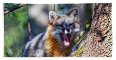 Gray Fox Awakens In The Tree Beach Towel